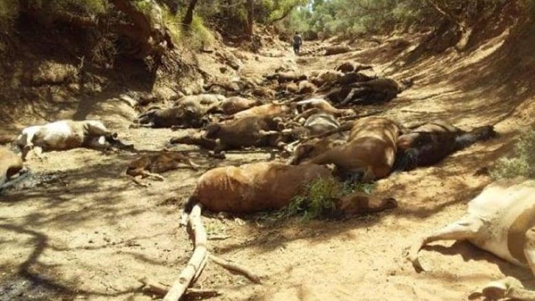 Australia: the record heat is a massacre of horses