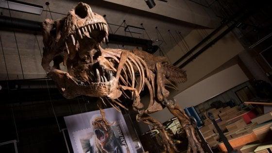 Colossale tirannosauro scoperto in Canada: è record