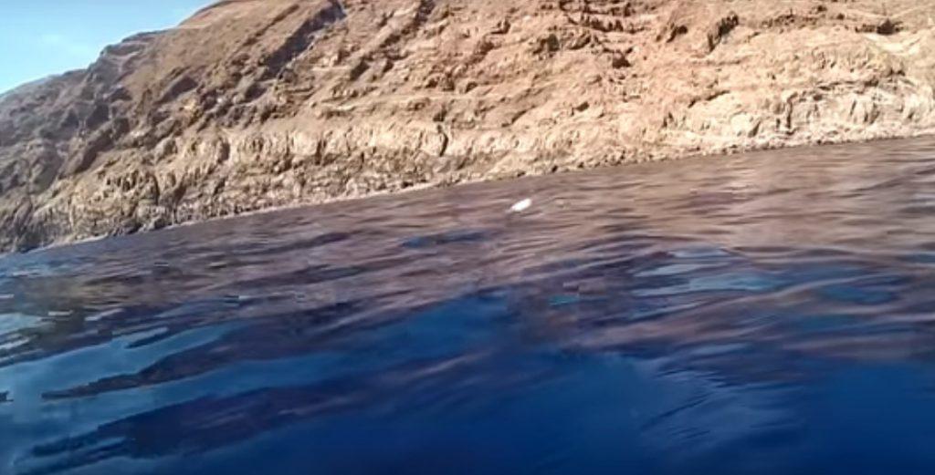 Messico: squalo bianco attacca la camera. Il video